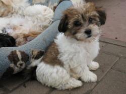 trainierter hund kaufen